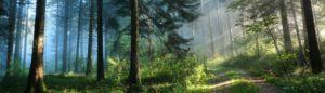 Skiareál Šerlišský mlýn Deštné v Orlických horách